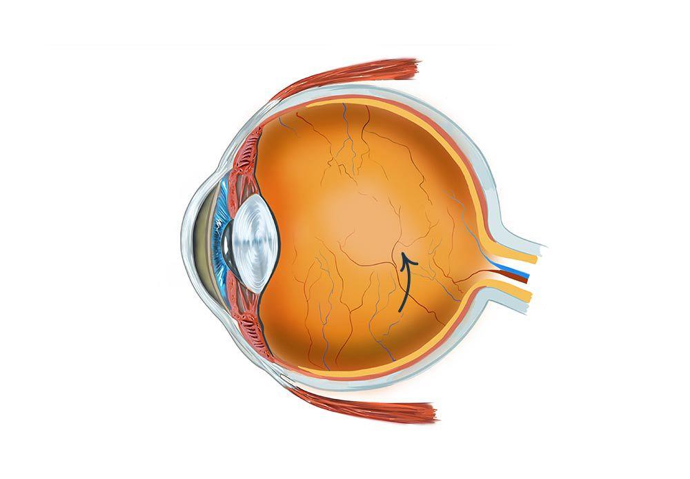 Augen Anatomie